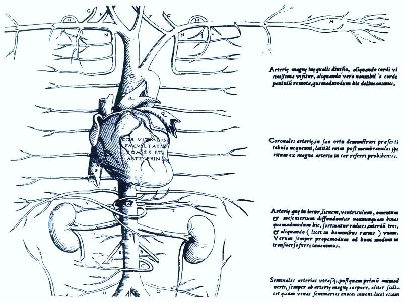 Miguel Servet y la circulación pulmonar (2/3)