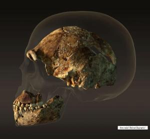 Homo naledi National geographic