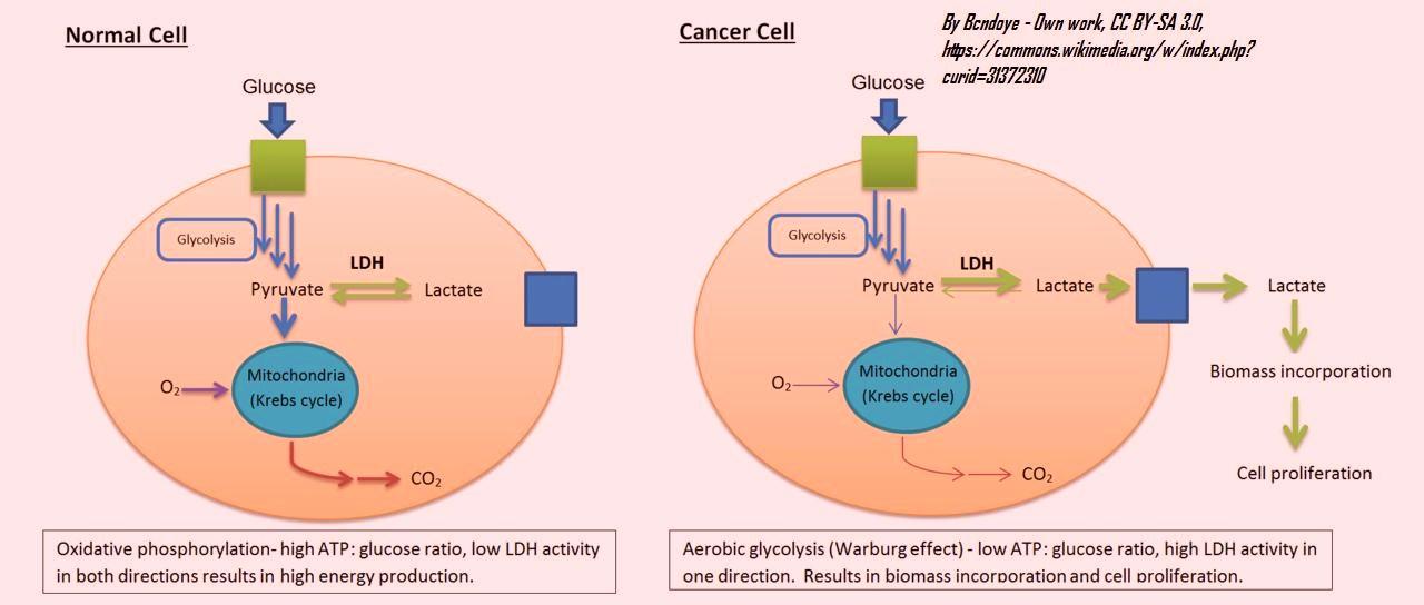 ldh_activity-_normal_vs_canceous_cells