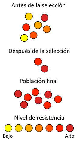 antibiotic_resistance_es