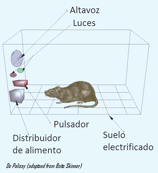 caja_de_skinner