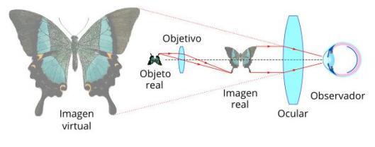 Imagen microscopio