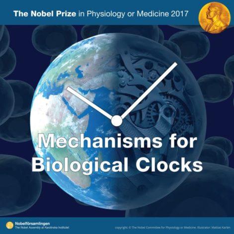 premio-nobel-medicina-ritmo-circadiano-640x640