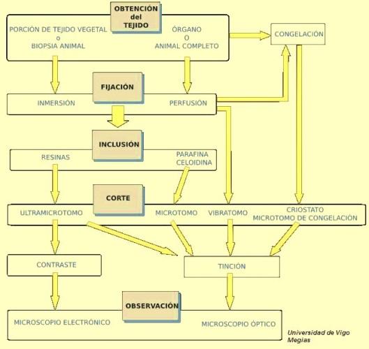 Tecnicas histológicas