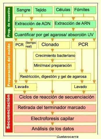 Secuenciación del ADN - copia