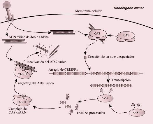 CRISPR~3