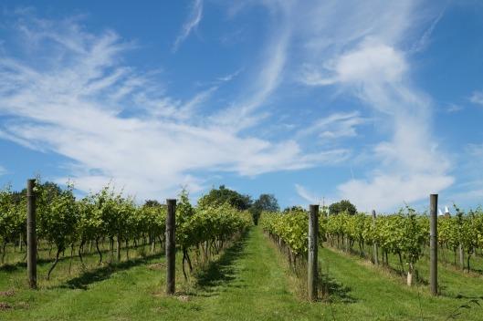 winery-1531344_1920