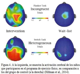 cerebro ejercicio 1 OK