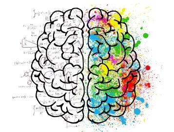 brain-2062057_960_720