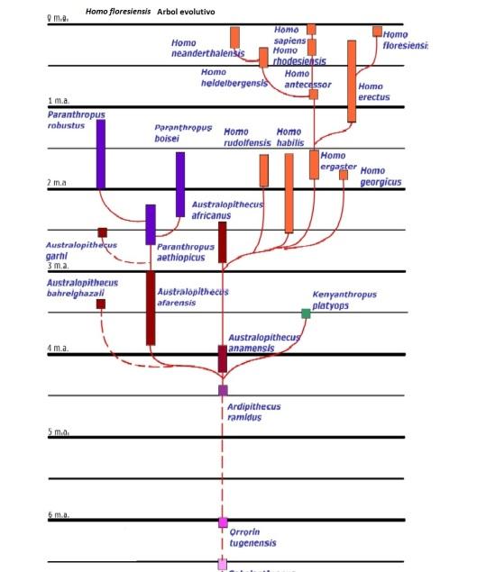 floresiensis arbol evolutivo