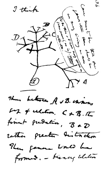 353px-Darwin_tree