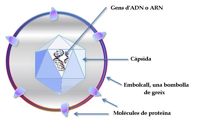 Estructura_d'un_virus ok