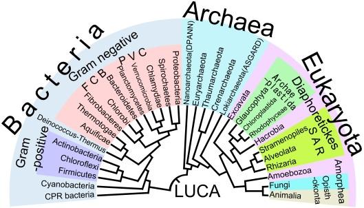 genealogia bacterias ok